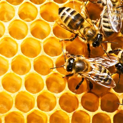 Aidons les abeilles